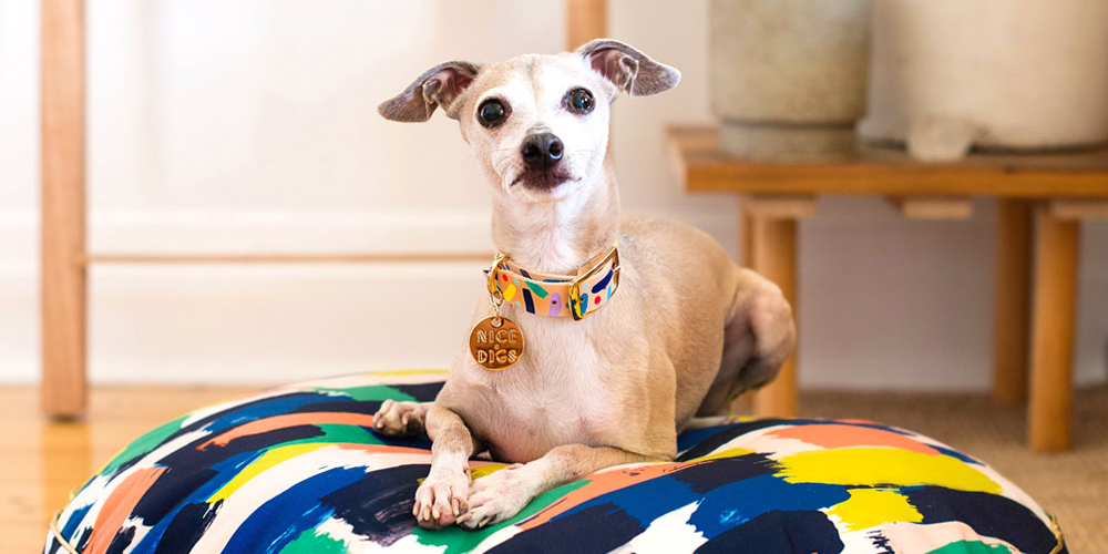NICE DIGS - CONFITTI COLLAR with Italian Greyhound