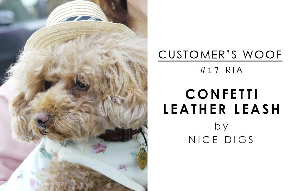 お客さまの声「Customers woof」#17 - トイプードルのリアちゃんとNice Digs のカラフルリード