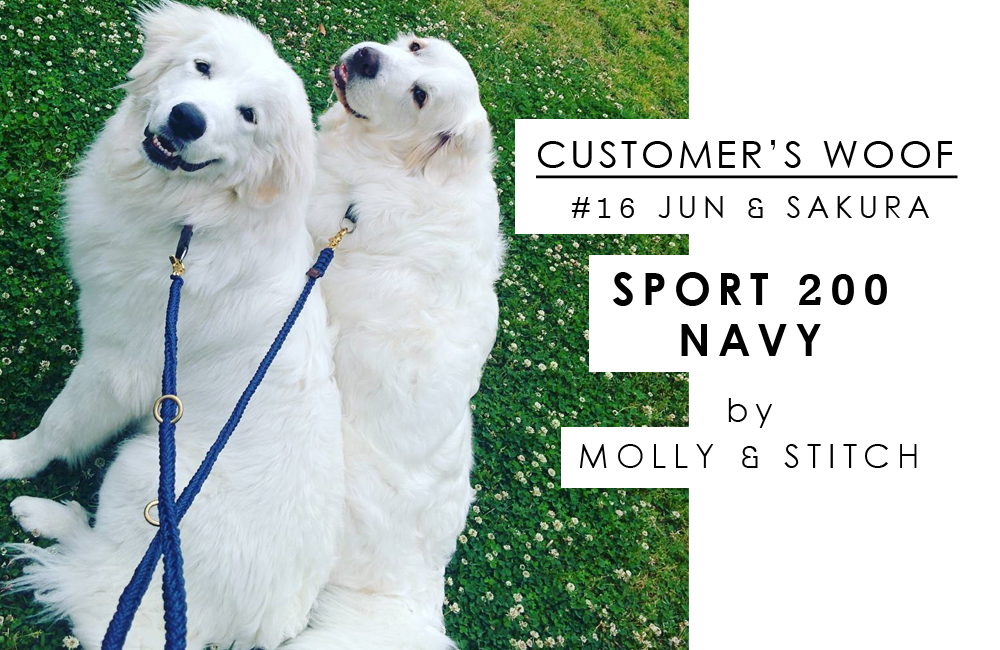 Customer's woof #16 : ジュンとサクラ with Molly and Stitch
