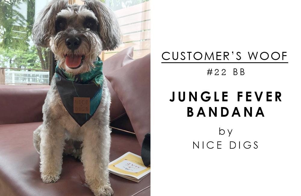 〈 お客さまの声 〉Customer's woof #22 ミニチュアシュナウザーの BBちゃんとNice Digs のジャングルバンダナ♡
