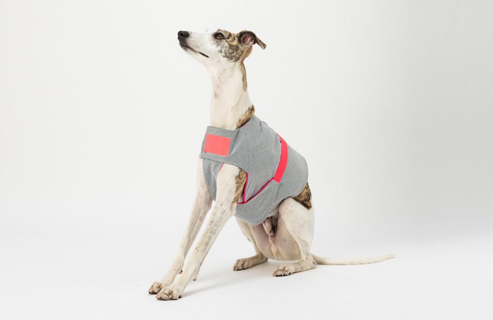イギリス発のドッグブランド「Dogsnug」のクーリングコートを入荷しました。