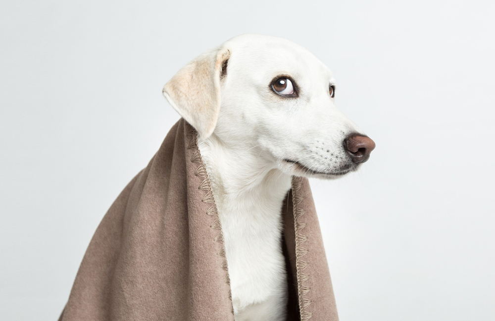 〈 新商品 〉ベルリンから、愛犬用やわらかブランケットを入荷しました(Cloud7)