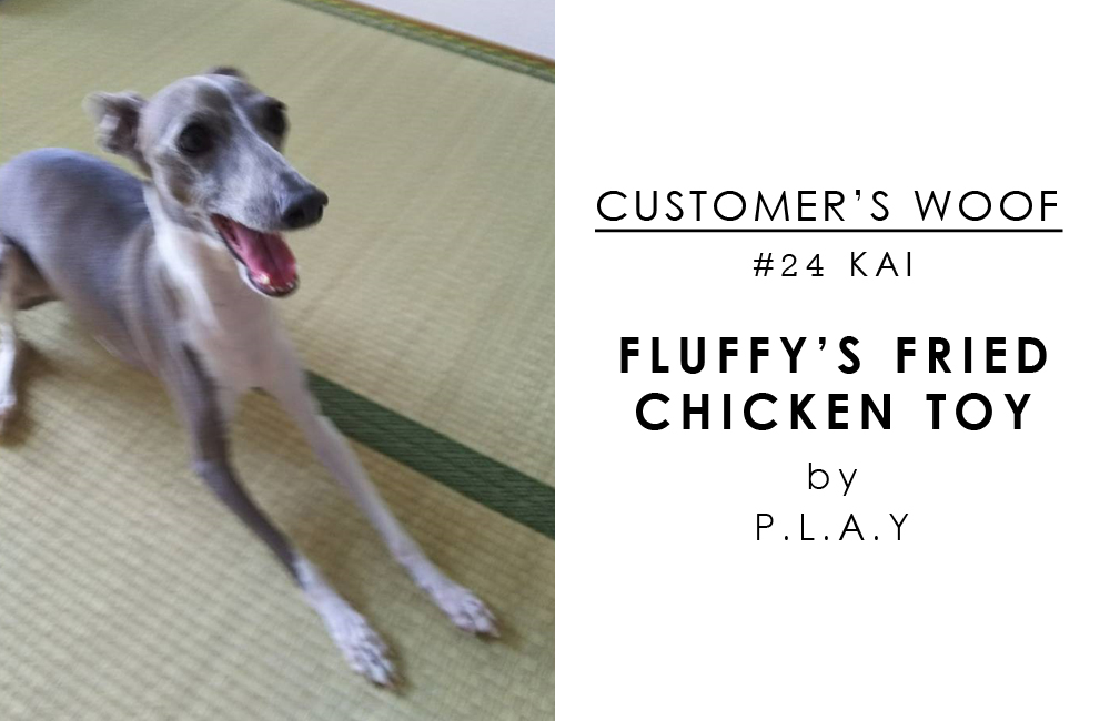 お客さまの声「Customer's woof #24」- イタグレの海くん、フライドチキンで遊ぶ!