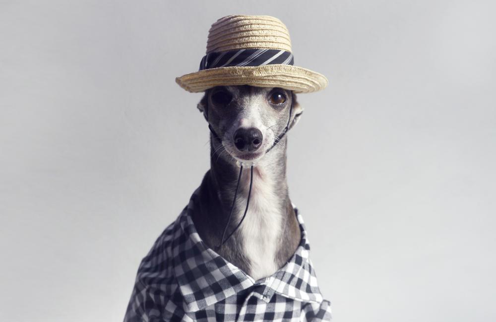 ギンガムチェックのシャツ、入荷しました(Dog threads from USA)
