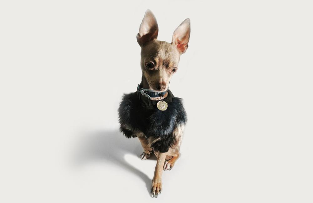メルボルン発のドッグブランド「EYE OF DOG」が日本初登場