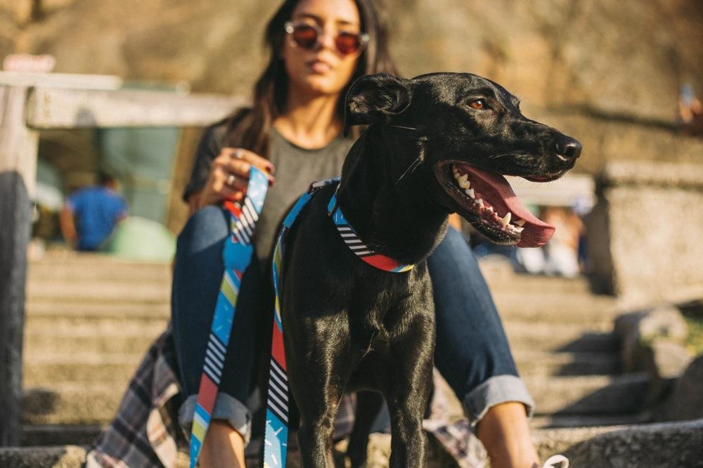 [ New Arrival ] 2018SS - NY発ドッグブランド「Zee.dog(ジードッグ)」の最新作はストリート系のハーネス&リード
