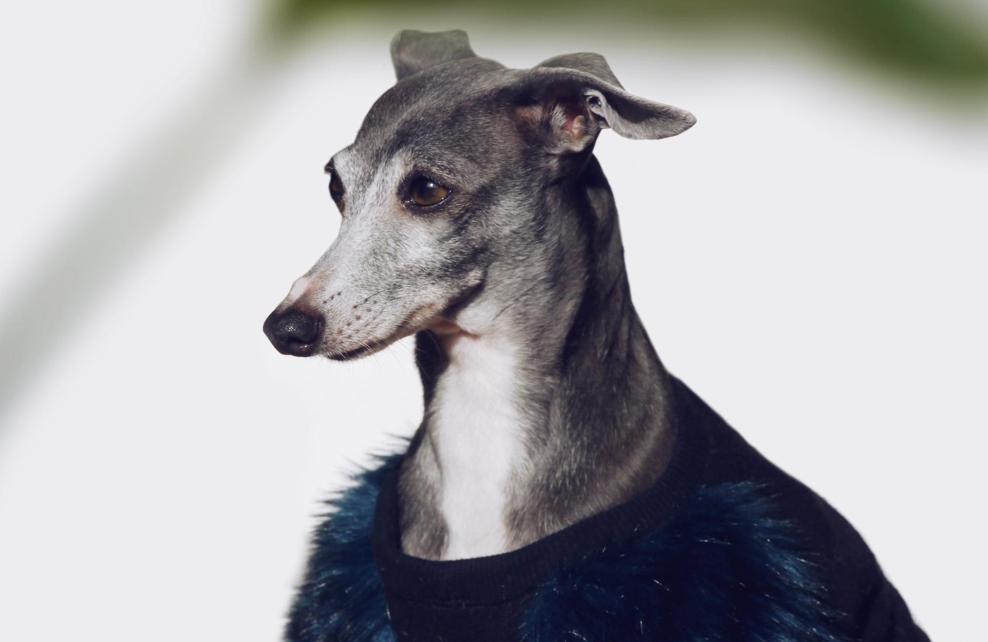 メルボルン生まれのドッグブランド「Eye of Dog」のファー付き愛犬用服は残りわずかとなりました。