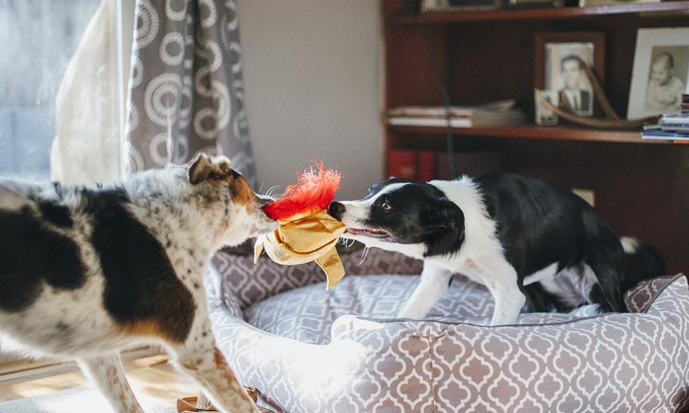 ひっぱりあいっこしてもOK。<br /> 愛犬のことを考えた、人に犬に環境に優しい「P.L.A.Y」のおもちゃです。