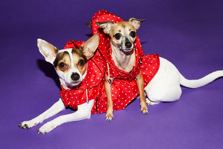 ニューヨーク生まれのドッグブランド「Ware of the dog(ウィア・オブ・ザ・ドッグ)」が、BEAST COASTにやってきた。