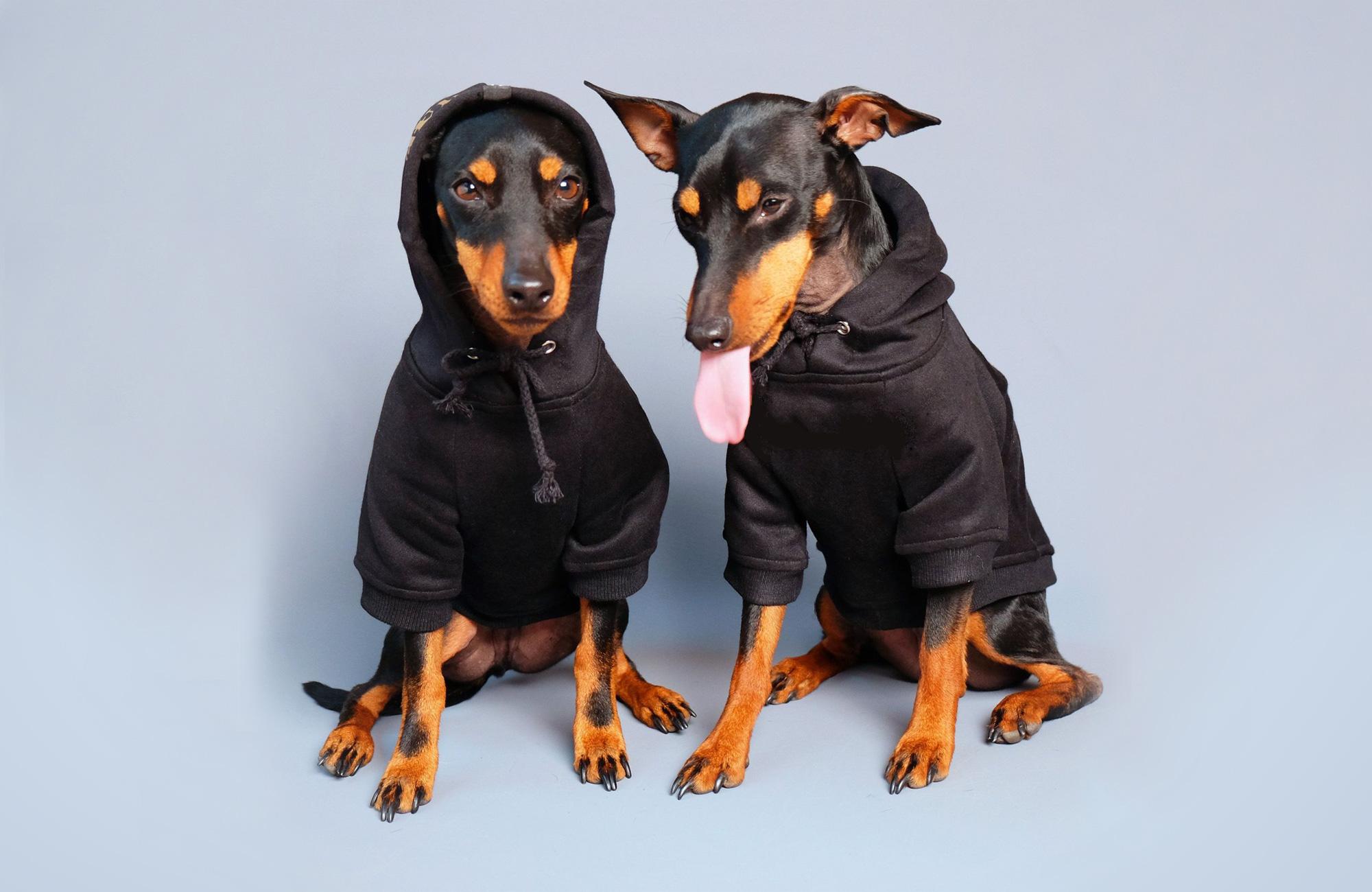 ニンジャパーカー | Ninja Dog Hoodie | Pethaus