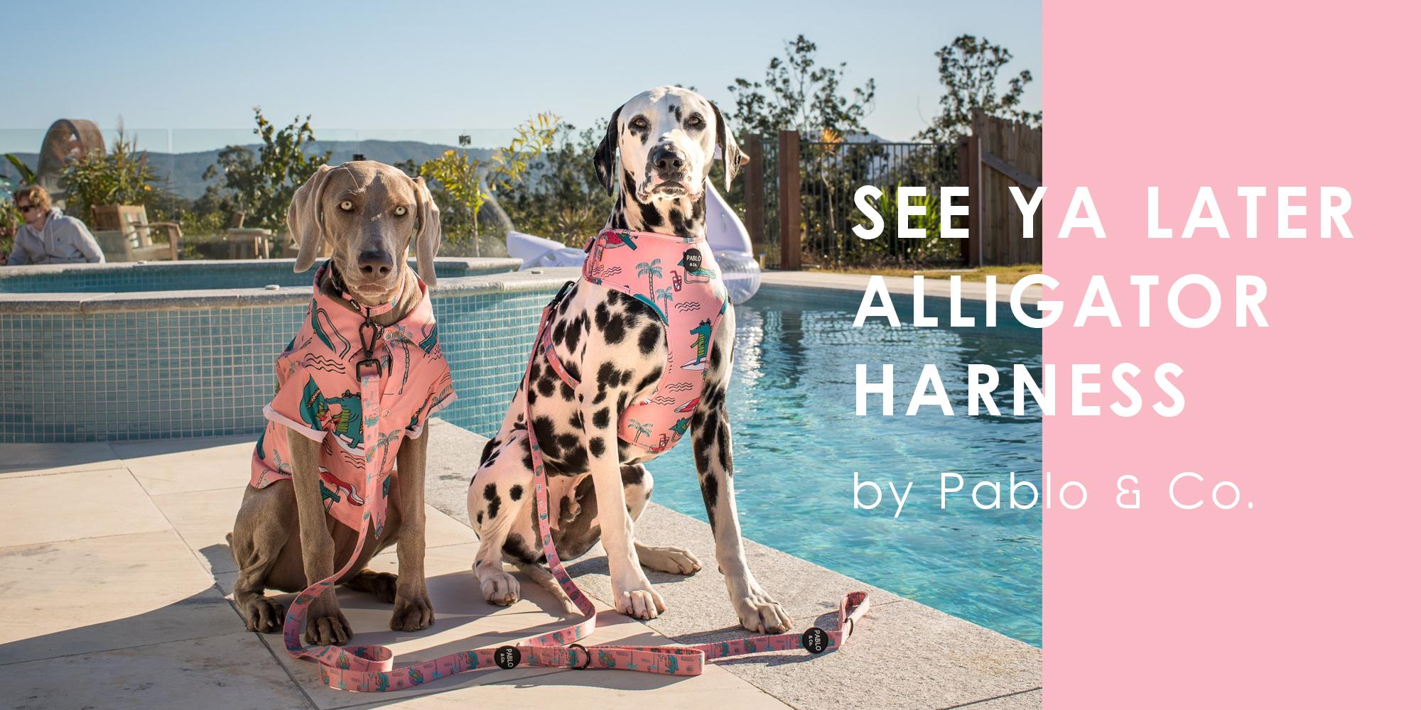 オーストラリア生まれのドッグブランド「Pablo&Co.(パブロ&コー)」から、スローライフを楽しむワニさん柄の愛犬用ソフトハーネスを入荷しました。