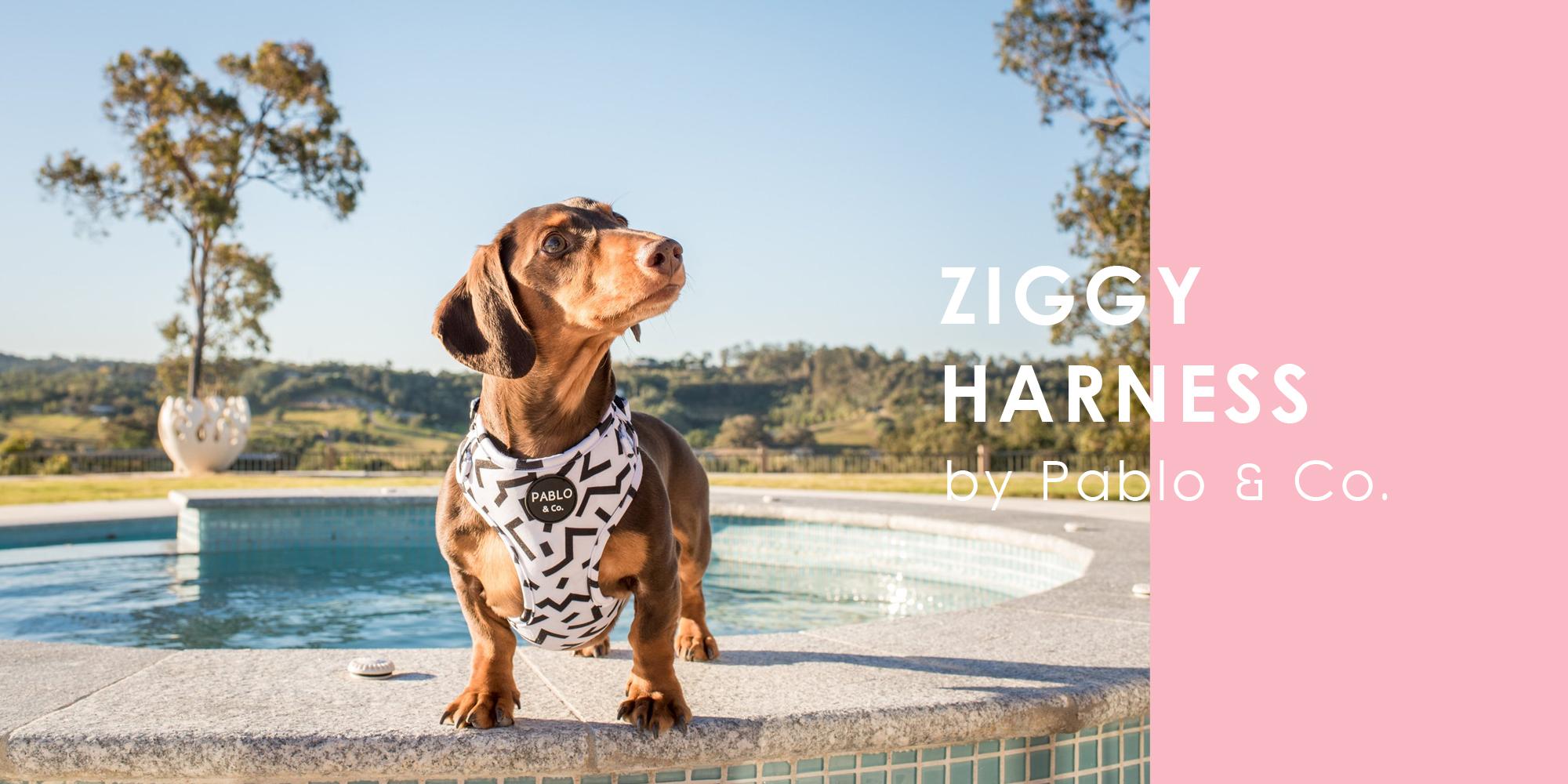 オーストラリア生まれのドッグブランド「Pablo&Co.(パブロ&コー)」から、ジグザグ模様の愛犬用ソフトハーネスを入荷しました。