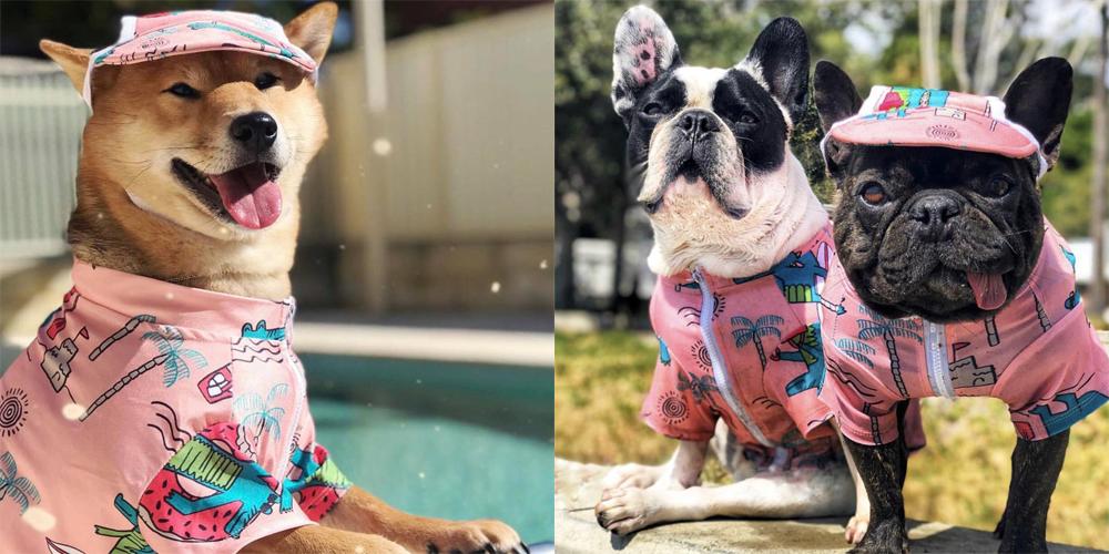 愛犬用ラッシュガードで夏を楽しむしば犬やフレンチブルドッグ。紫外線対策用、愛犬のラッシュガードです。