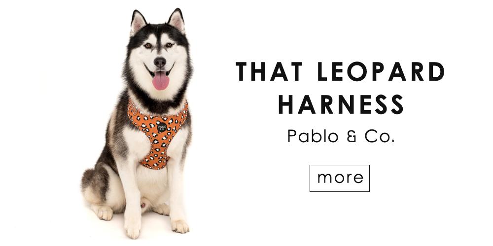 海外から直輸入、愛犬用ハーネス