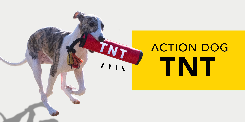 イギリス「Ancol」から爆弾型犬用おもちゃをくわえるウィペット・リブラ