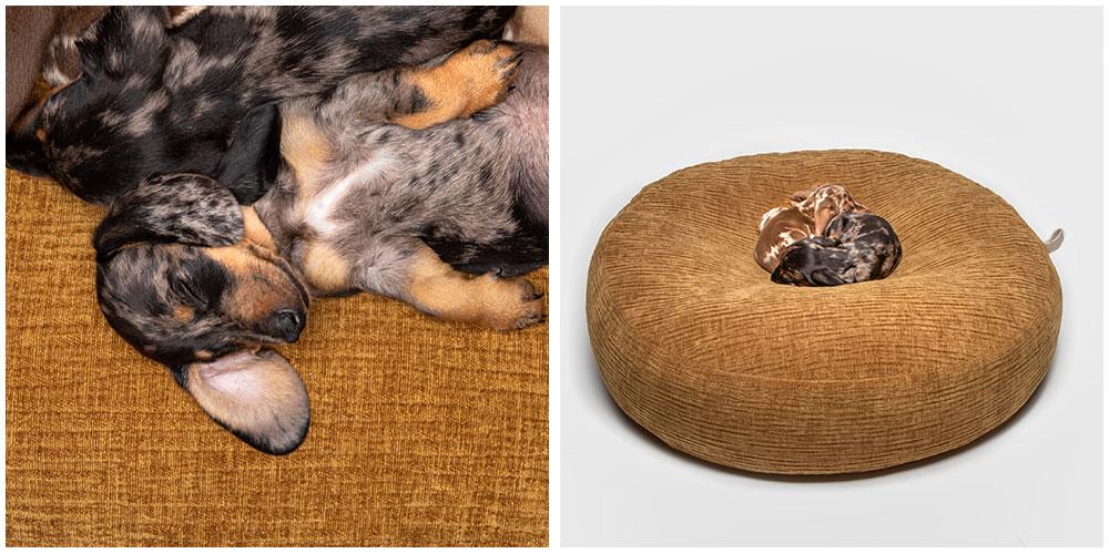 丸い愛犬用ベッドで眠る子犬達(DOG BED POUF BOHÈME DIJON / CLOUD7)