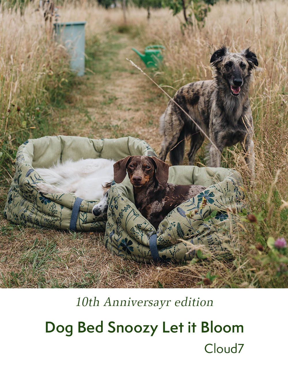 Cloud7   DOG BED SNOOZY LET IT BLOOM   設立10周年記念数量限定