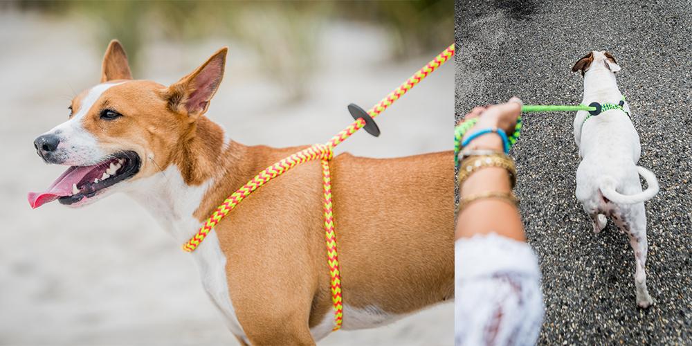 大型犬、中型犬、いろんなサイズの犬種にご利用いただけます。 by HARNESS LEAD from USA