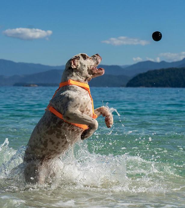 zee.dog 犬用おもちゃ