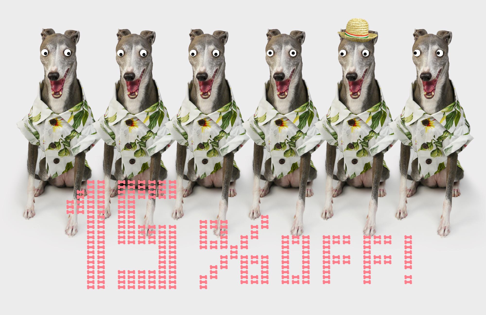 日本初登場!US発ドッグブランド「dog threads」が今だけ15%OFF!