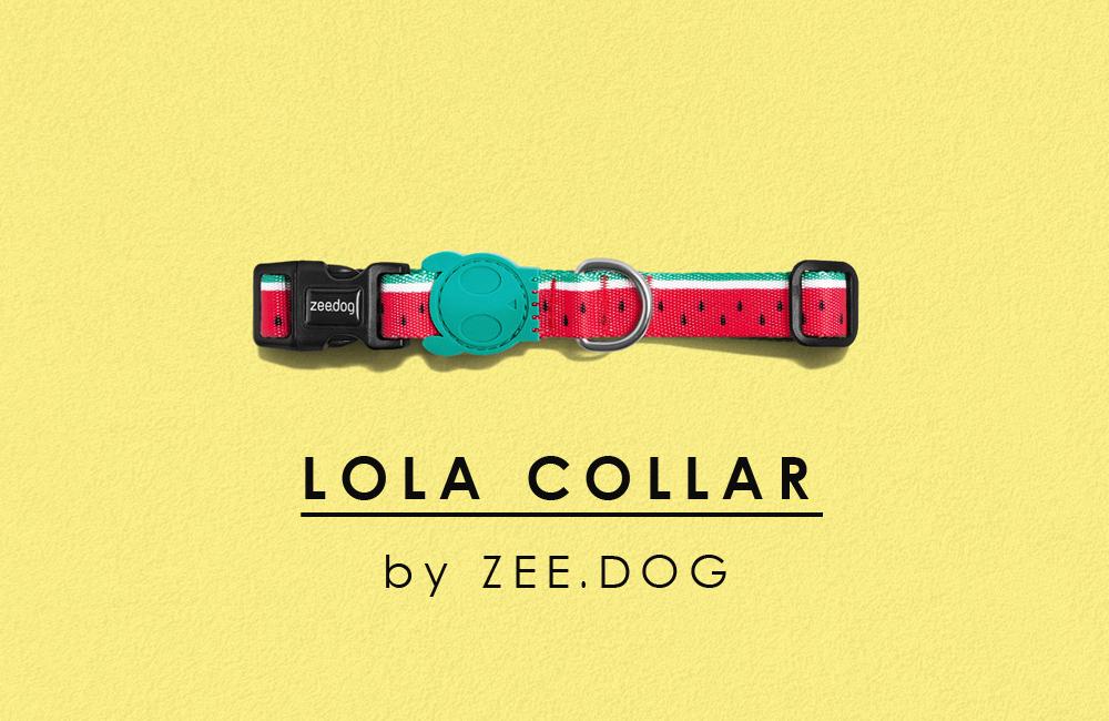 〈 新商品 〉夏のモードを「ON」にする。スイカ柄の犬用首輪 by zee.dog