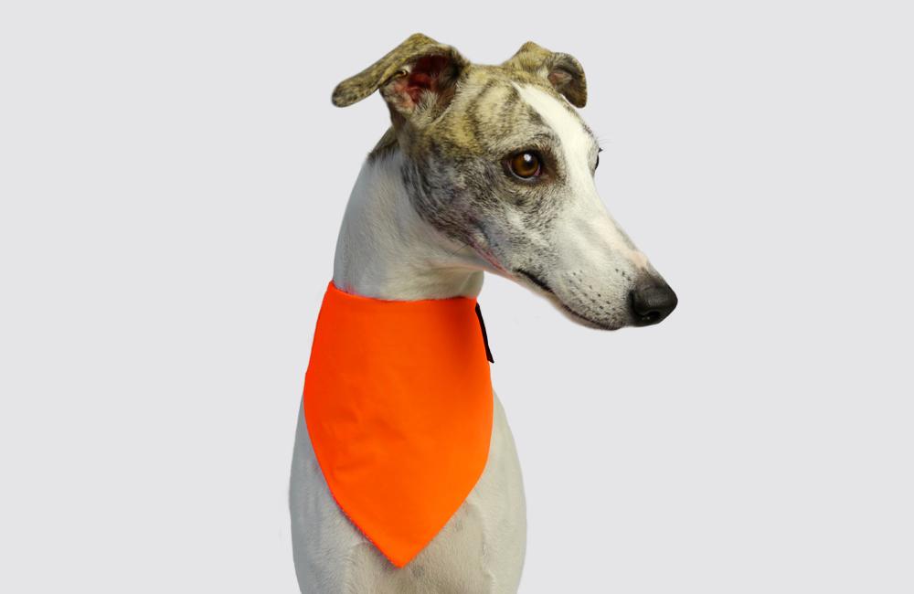 イギリスのドッグブランド「Dogsnug」から、夜にのお散歩で目立つバンダナ入荷しました。