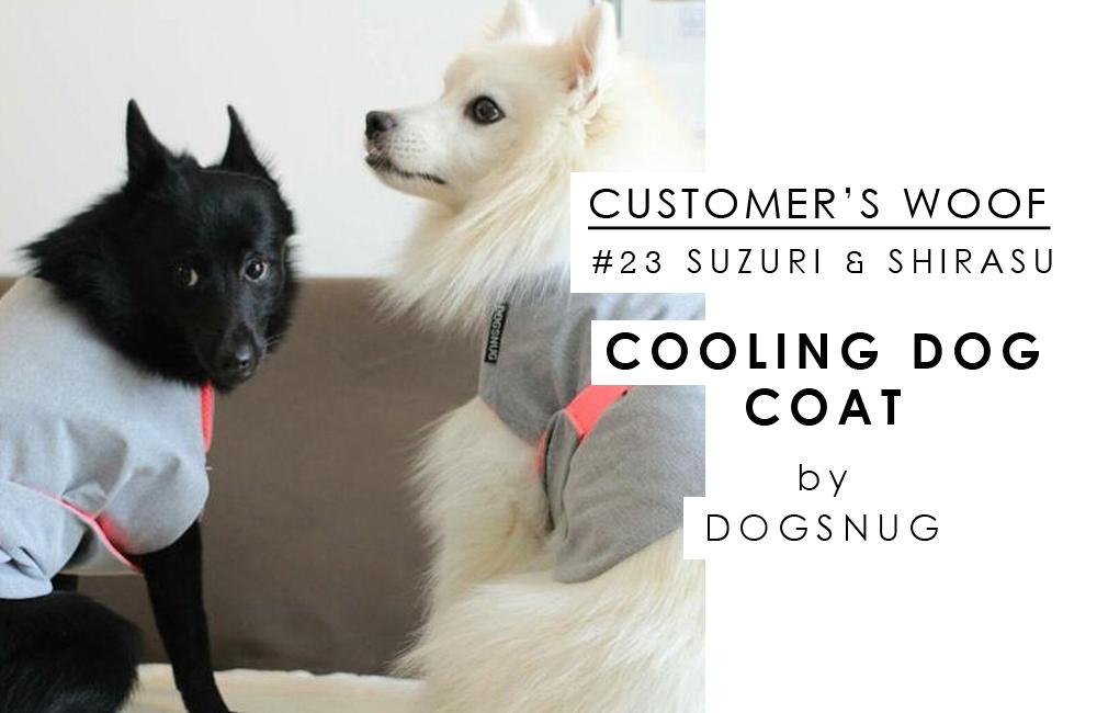 〈 お客さまの声 〉Customer's woof #23 日本スピッツのしらすちゃんと、スキッパーキのすずりちゃん with Dogsnug Cooling Dog Coat