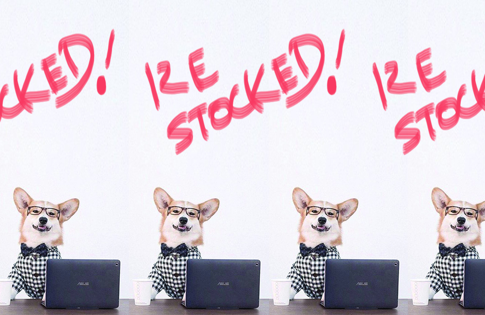 〈 再入荷 〉US発「Dog Threads」の愛犬用ギンガムチェックのシャツを再入荷いたしました / 2017.10.21