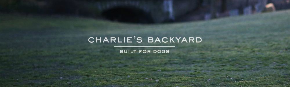 Charlie's backyard / Korea