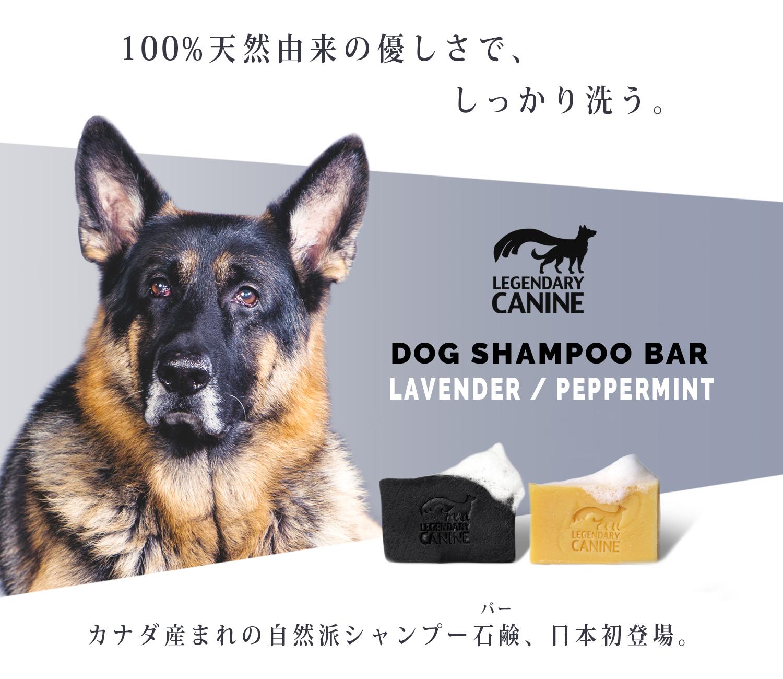 100%天然由来成分の優しさで、しっかり洗う。カナダ産まれの自然派シャンプーバー、日本初登場。|Legendary Canine(レジェンダリー・ケイナイン)