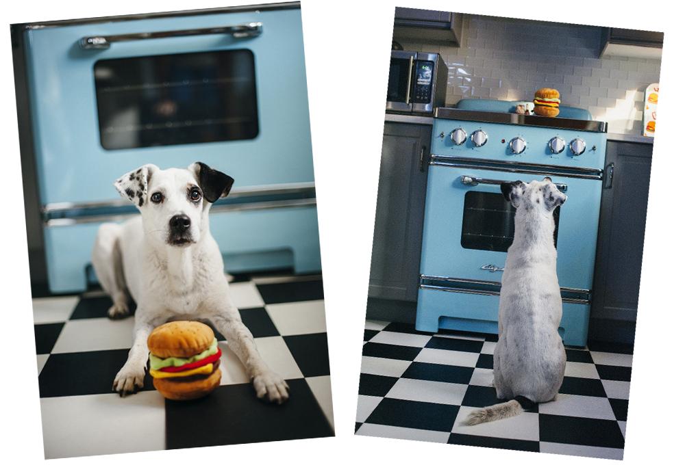 愛犬のための安心安全おもちゃ by P.L.A.Y