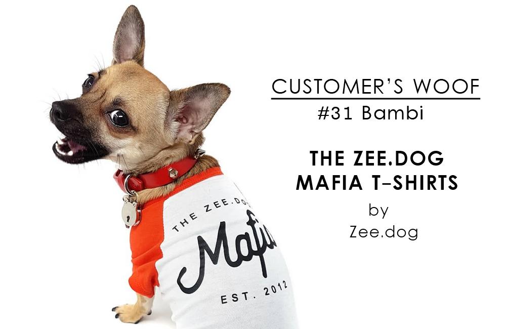 Customer's Woof #31 - ロンドン在住チワワのバンビさん。Zee.dogのマフィアTシャツがお気に入り
