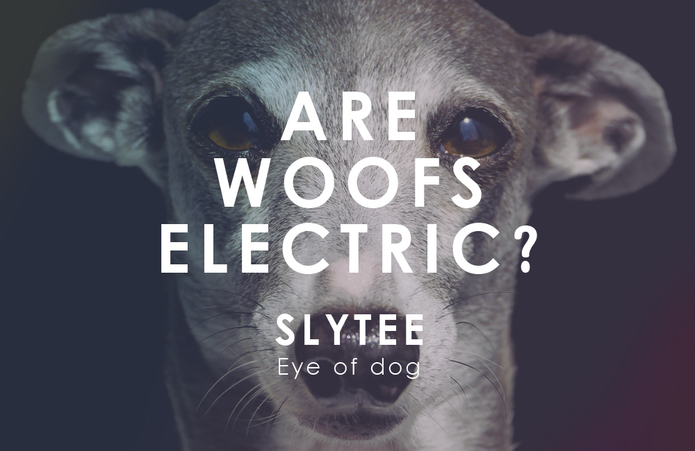 Are woofs electric? / Sly tee by Eye of dog / Model by Darco (Italian Greyhound)