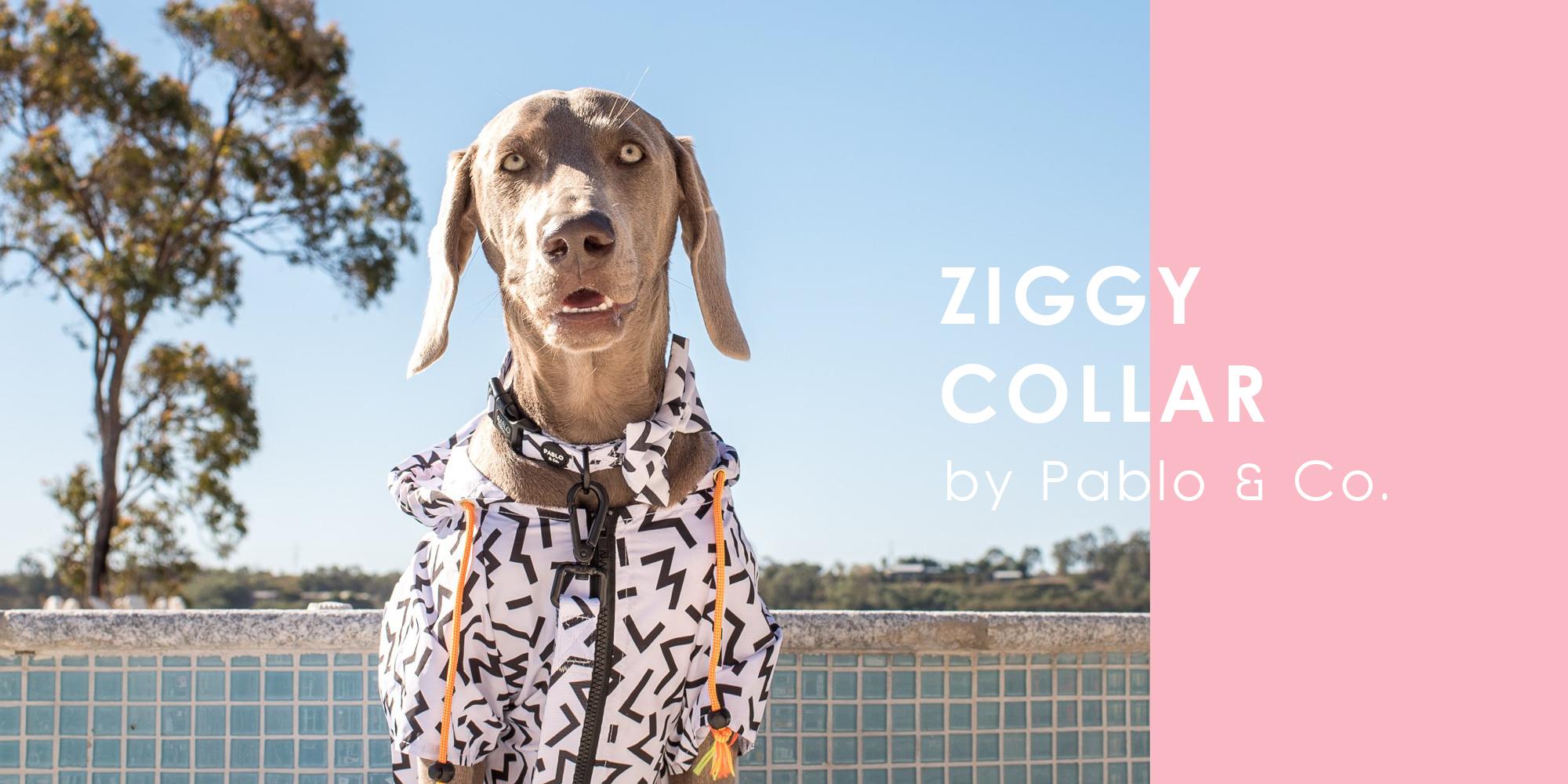 オーストラリアのドッグブランド「Pablo & Co.(パブロ&コー)」のシンプルジグザグ模様の首輪。
