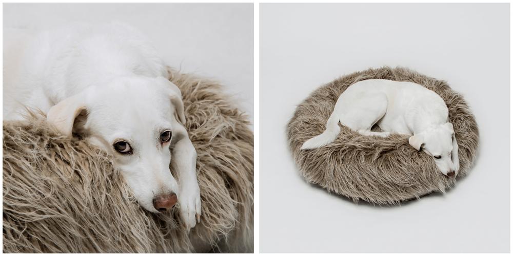 Cloud7のオーナーさんの元保護犬わんこです。