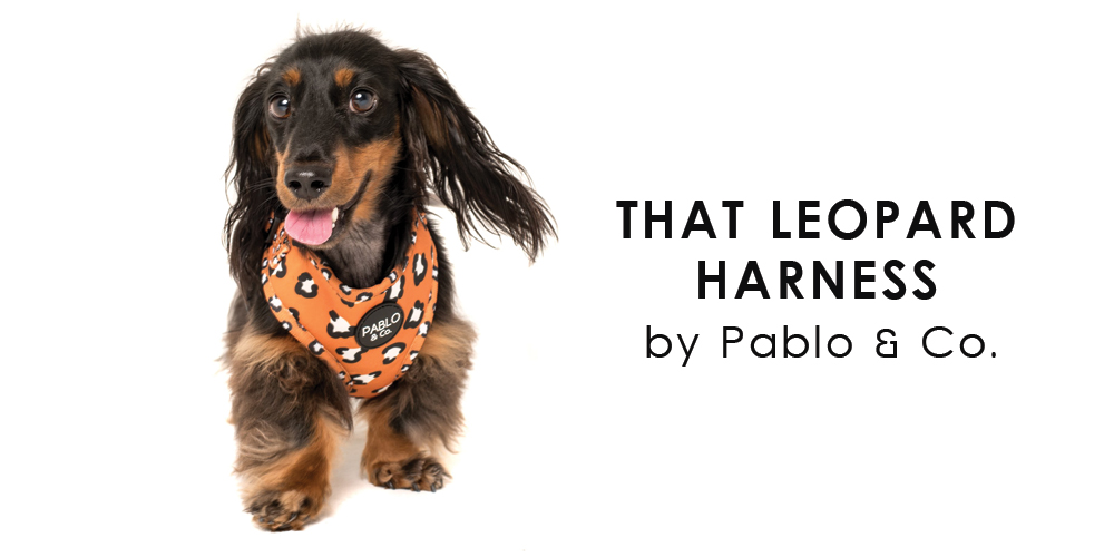オーストラリア生まれのドッグブランド「Pablo&Co.(パブロ&コー)」から、ヒョウ柄の愛犬用ソフトハーネスを入荷しました。