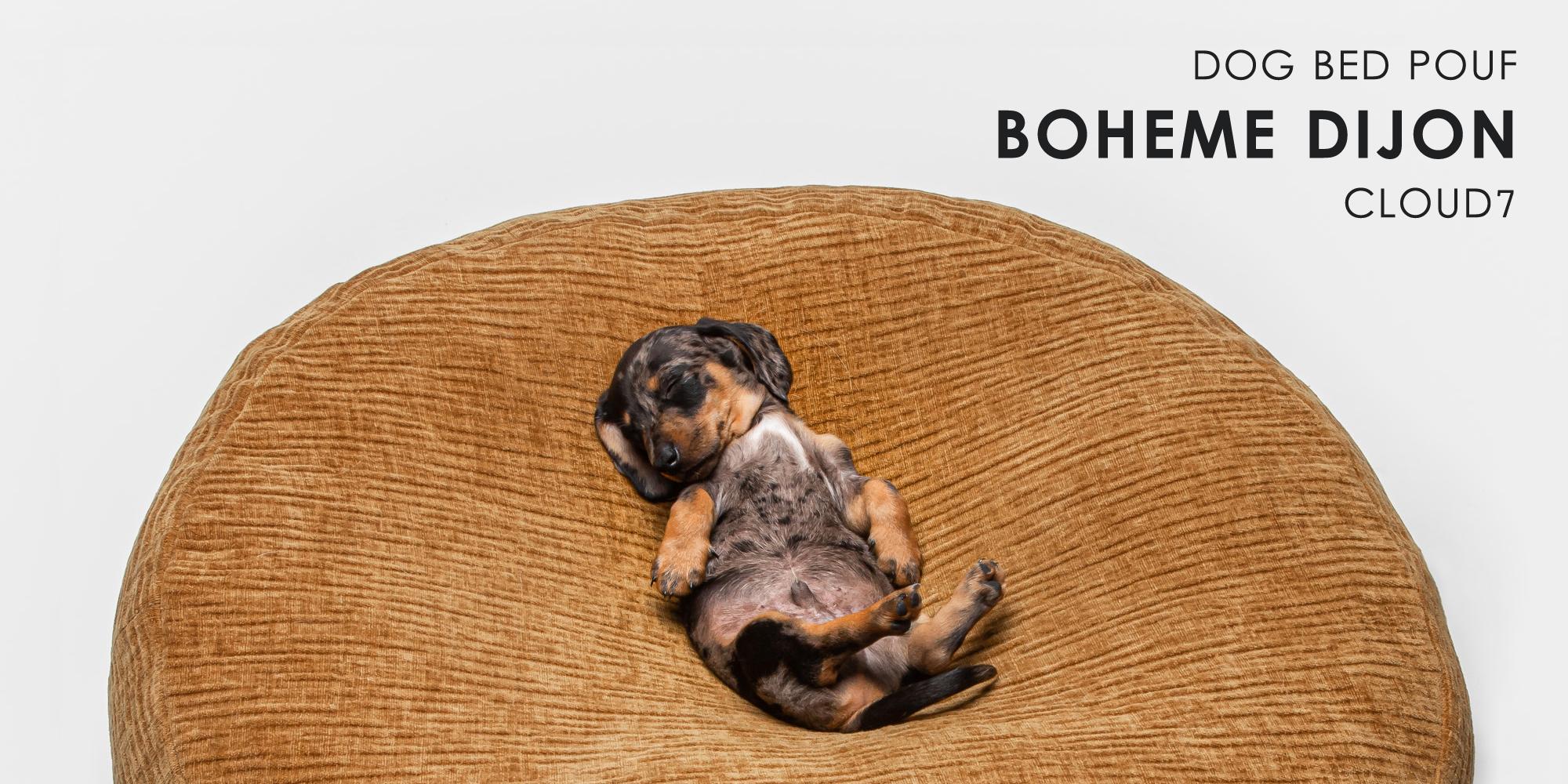 ドイツ生まれの愛犬用ベッド「DOG POUF BOHÈME DIJON」に眠るミニチュアダックスフンドの子犬