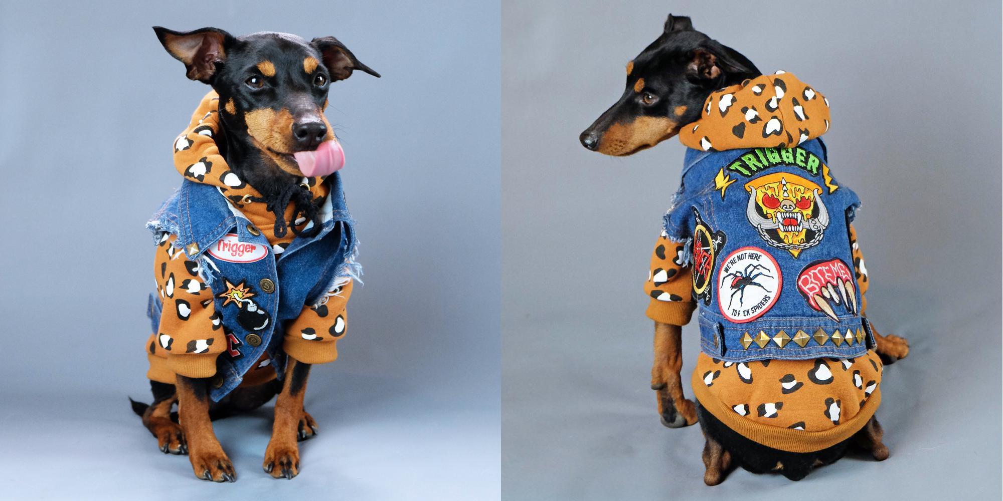 愛犬用デニムとパーカーの重ね着は短毛族の必需品!